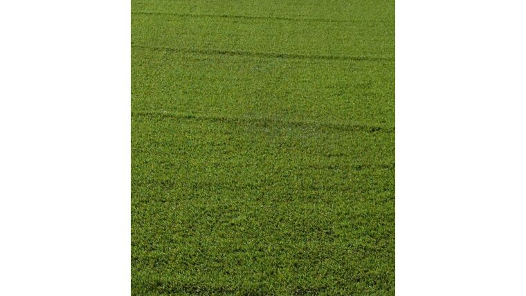Picture of a 17' w X 10' L Turf