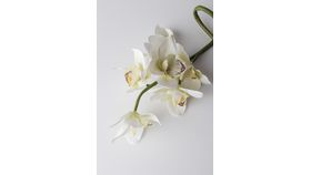 Image of a Artificial White Orchids