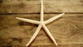 "Image of a 4"" Pencil Finger Starfish - Tan"