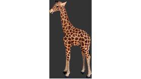 Image of a Baby Giraffe