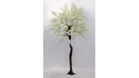Image of a Dogwood Tree