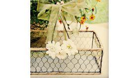 Image of a Chicken Wire Basket
