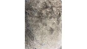 Image of a Brown Beige Fur (2019-17)