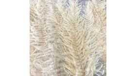 Image of a Dried Bleached Fern