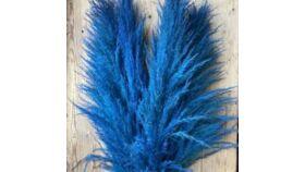 Image of a Blue Pampas Grass