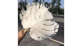 Image of a Dried Bleached Monstera Leaves