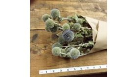 Image of a Dried Globe Thistle