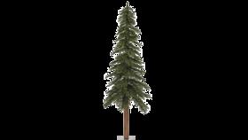 Image of a Alpine Tree