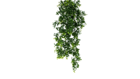 "Image of a Greens - Faux Hanging Boxwood - 23"" H x 10"" W"