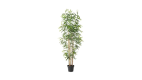"Image of a Greens - Faux Bamboo, Potted - 68"" H in 8"" D in pot"