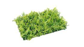 "Image of a Greens - Mixed Fern Mat, Green 25"" L x 17"" W"