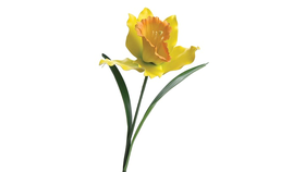 "Image of a Floral - Flower Giant Daffodil, Yellow - 42 ""H x 15"" dia."
