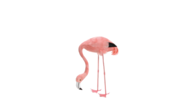 "Image of a Animal - Flamingo Real Feather (Head Down), Pink - 27"" H"