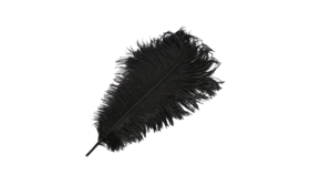 "Image of a Animal - Ostrich Feather, Black - 18"" L"
