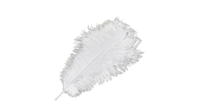 "Image of a Animal - Ostrich Feather, White - 18"" L"