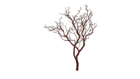 Image of a Tree - Manzanita Branch, Brown - LG 3' - 6'