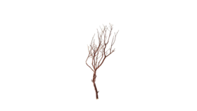 Image of a Tree - Manzanita Branch, Brown - SM 2'- 4' H