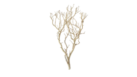"Image of a Tree - Manzanita Branch, Sandblasted - 30"" H x 16"" W"