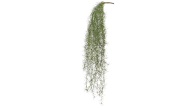 "Image of a Greens - Faux Hanging Moss Pick - 36"" L"