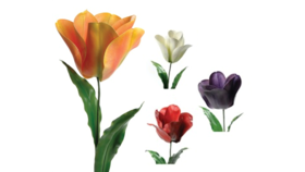 Image of a Floral - Flower Giant Tulip, White - 6' H