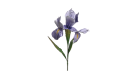 "Image of a Floral - Flower Giant Iris, Purple - 64"" H"