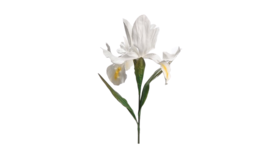 "Image of a Floral - Flower Giant Iris, White - 64"" H"