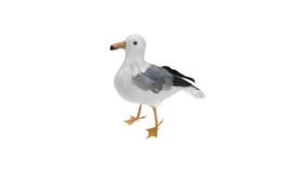 "Image of a Animal - Seagull, Grey | White - 12"" H"