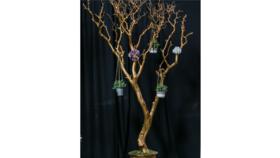 Image of a 8' GOLD MANZANITA TREE